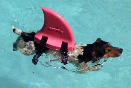「スイムフィン」を使用している犬